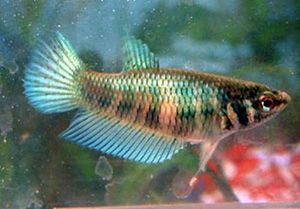 Can Betta Food Be Harmful For Humans